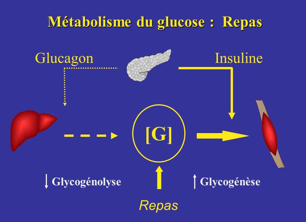 Métabolisme du glucose : Repas