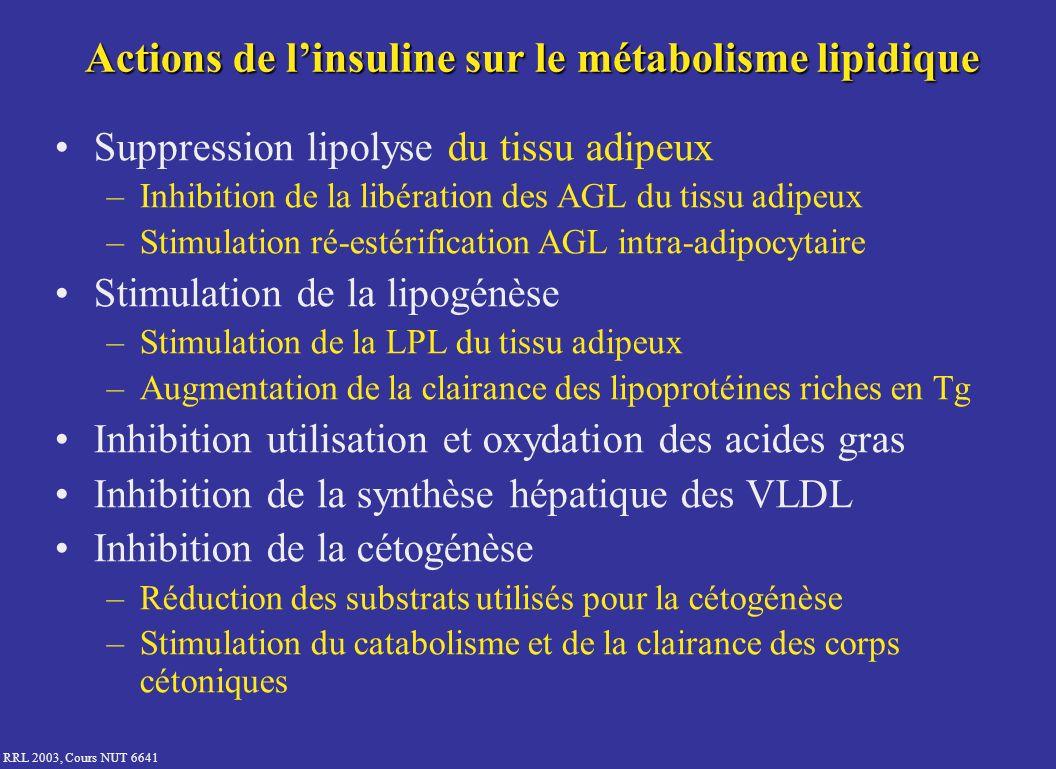 Actions de l'insuline sur le métabolisme lipidique