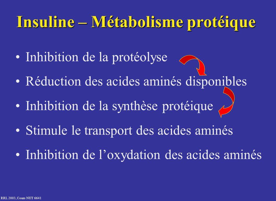 Insuline – Métabolisme protéique