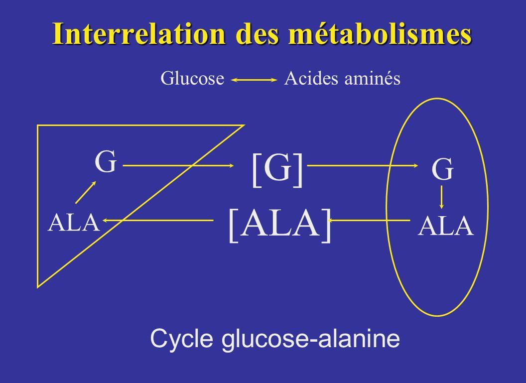Interrelation des métabolismes