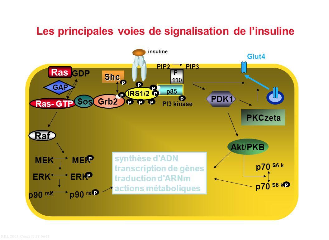 Les principales voies de signalisation de l'insuline