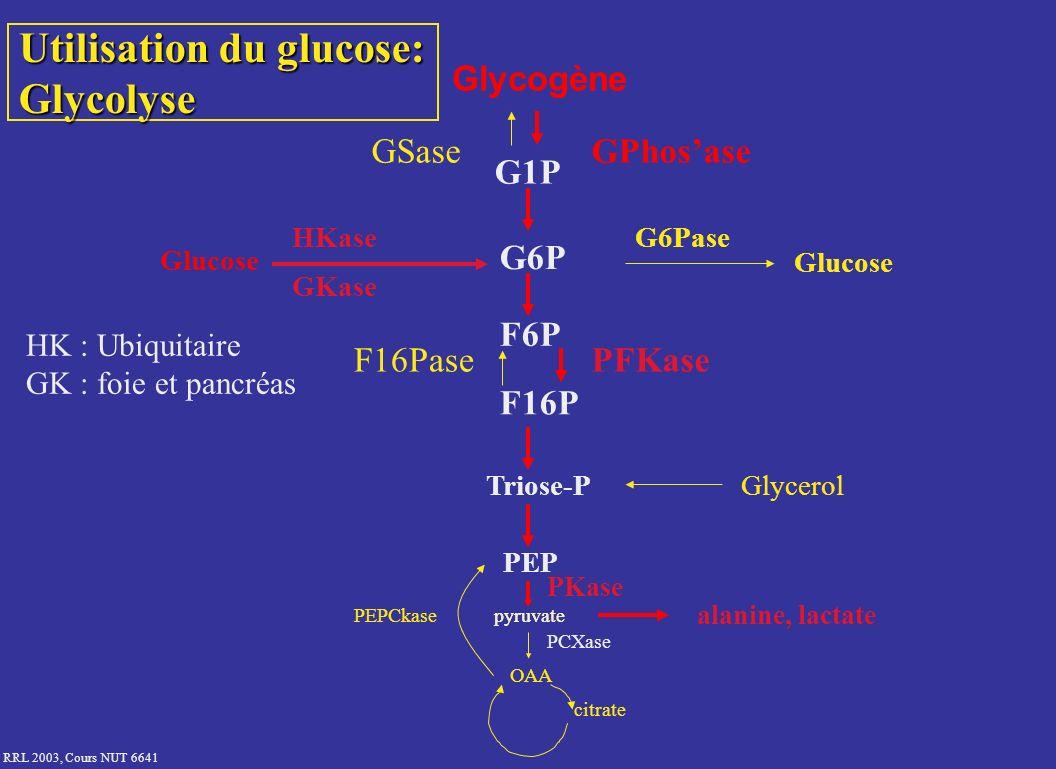 Utilisation du glucose: Glycolyse