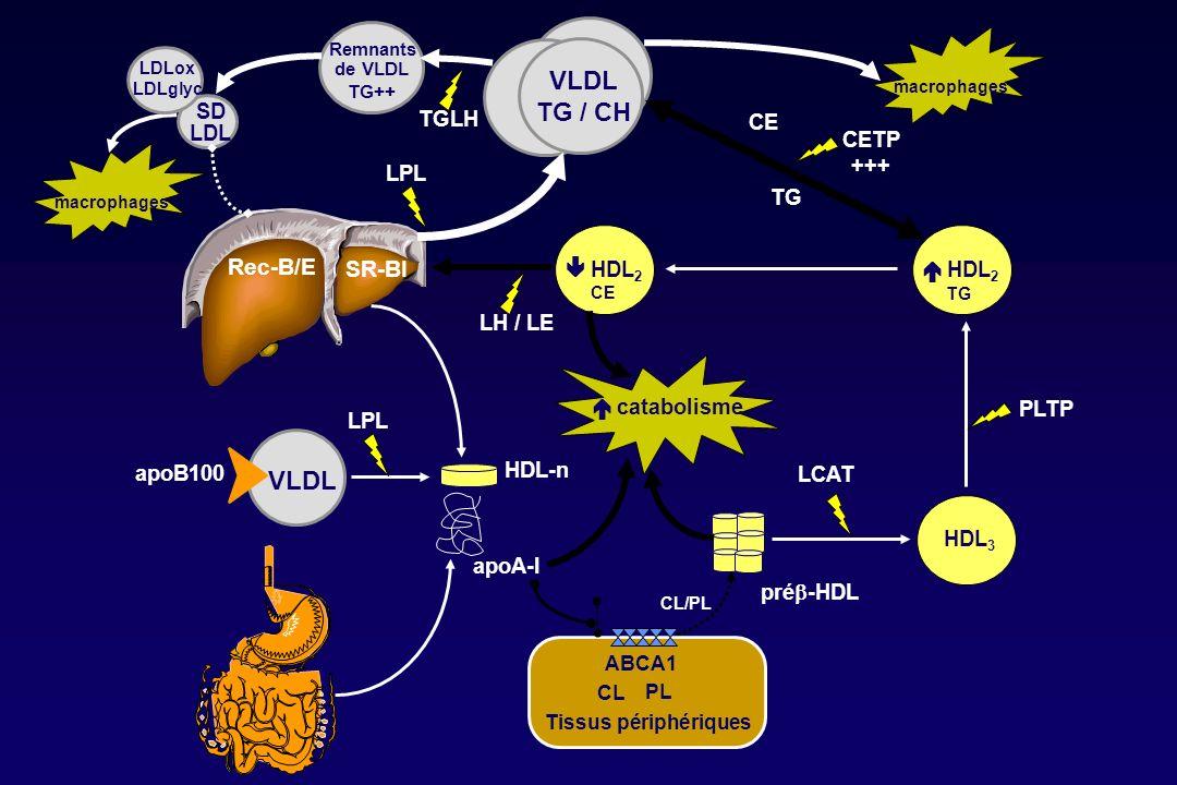 VLDL TG / CH VLDL Rec-B/E SR-BI SD LDL TGLH CE CETP +++ LPL TG  HDL2