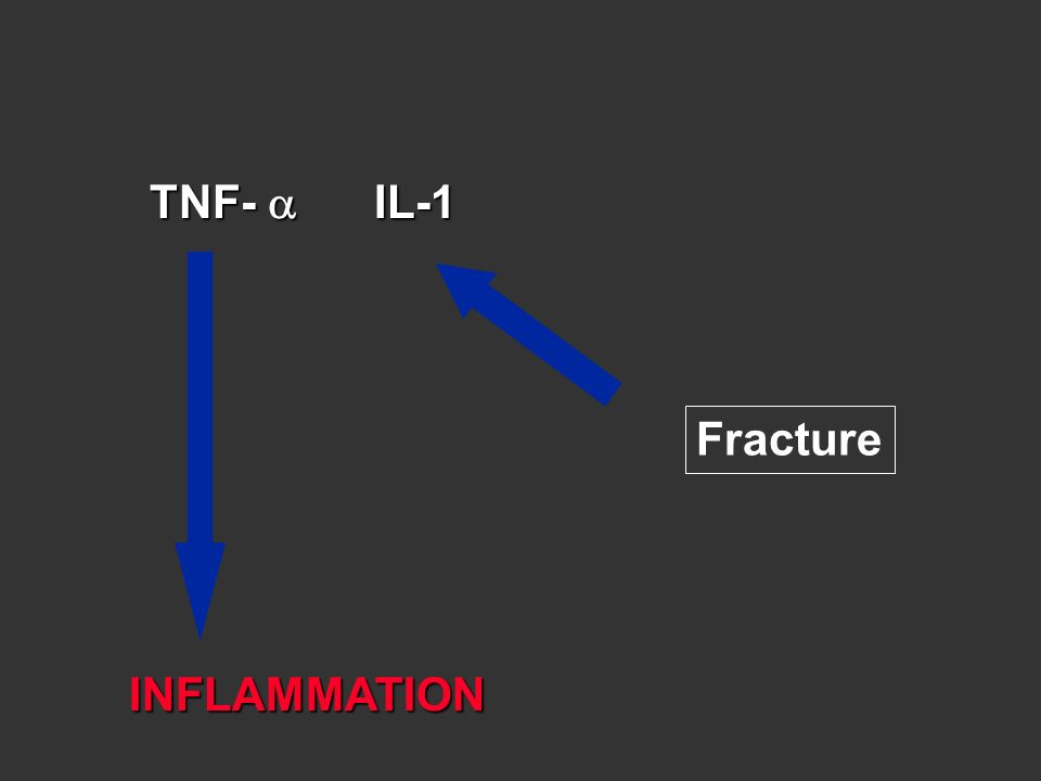 TNF-  IL-1 Fracture INFLAMMATION
