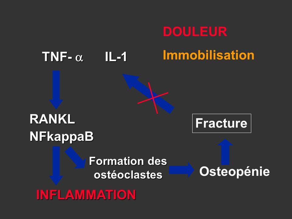 Formation des ostéoclastes