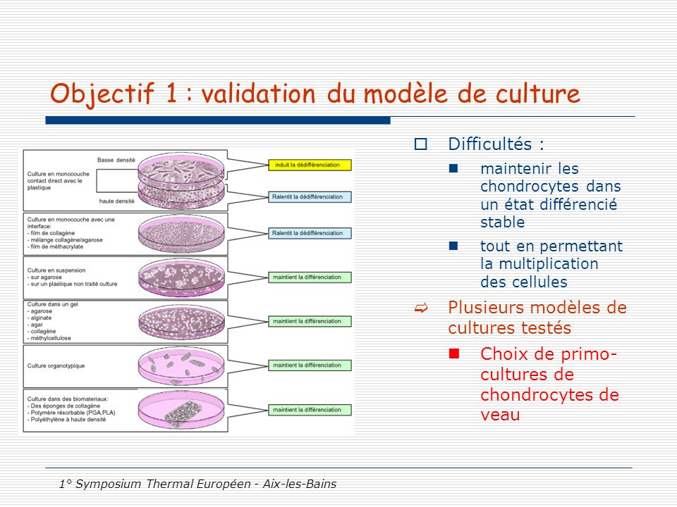 Objectif 1 : validation du modèle de culture