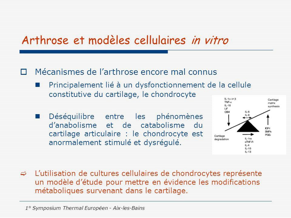 Arthrose et modèles cellulaires in vitro