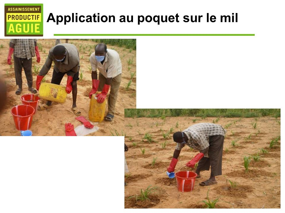 Application au poquet sur le mil