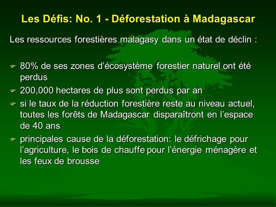 Les Défis: No. 1 - Déforestation à Madagascar