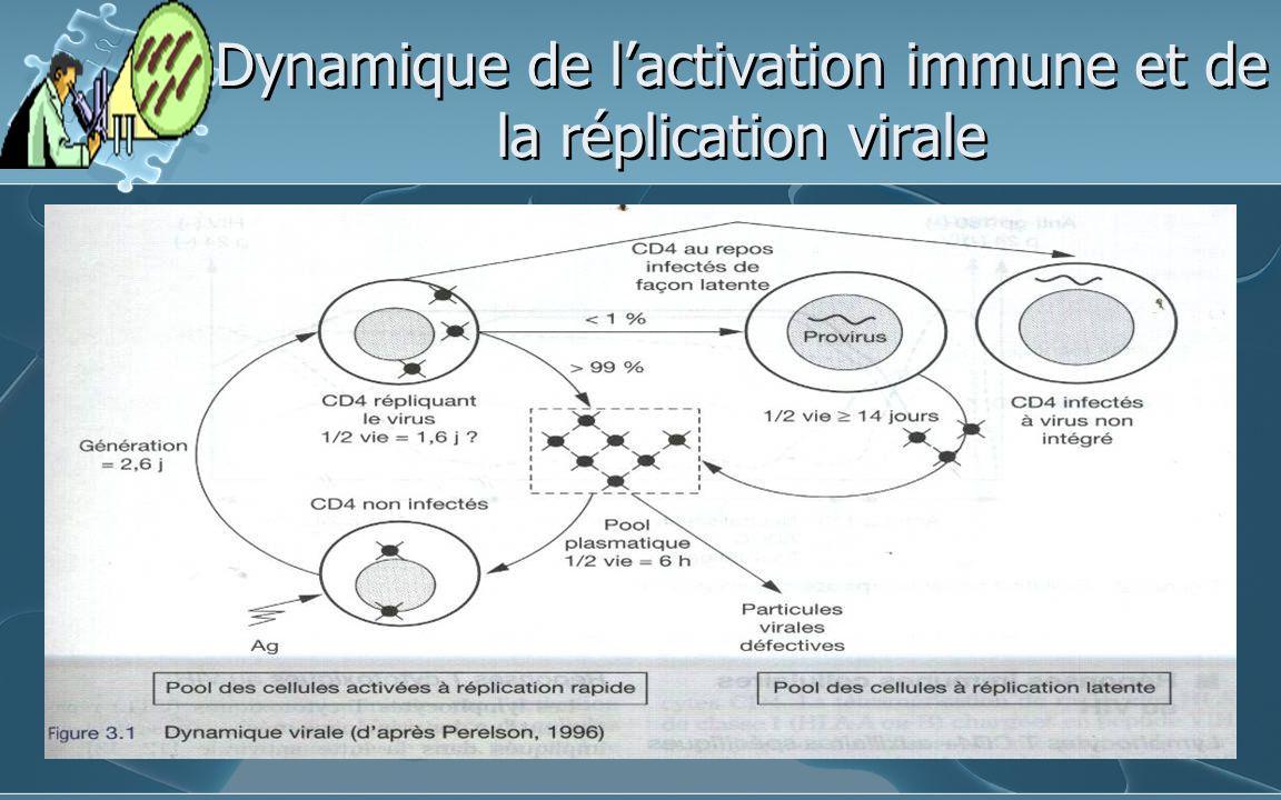 Dynamique de l'activation immune et de la réplication virale