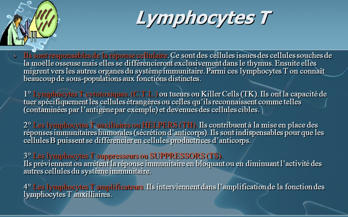 Lymphocytes T