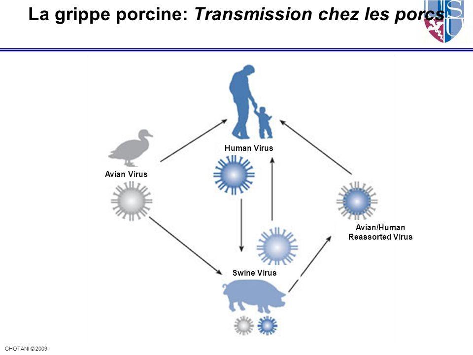 La grippe porcine: Transmission chez les porcs