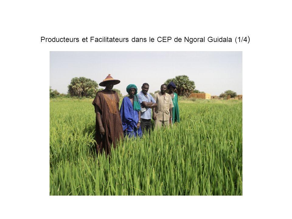 Producteurs et Facilitateurs dans le CEP de Ngoral Guidala (1/4)