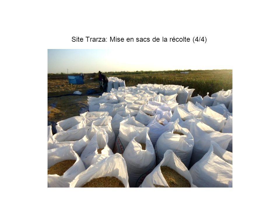 Site Trarza: Mise en sacs de la récolte (4/4)