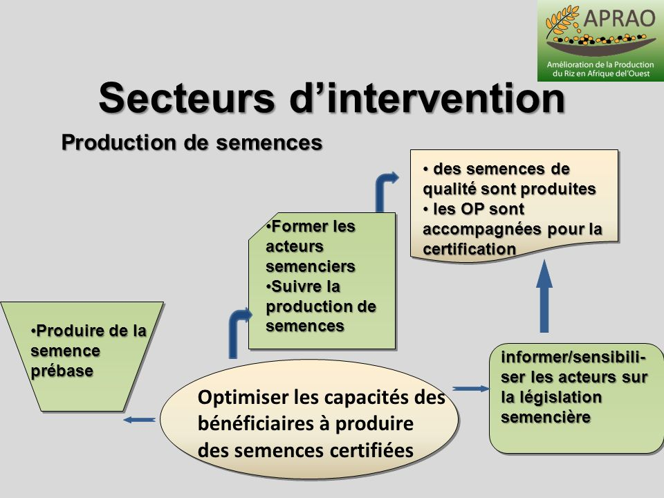 Secteurs d'intervention Production de semences