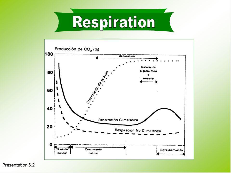 Respiration Présentation 3.2