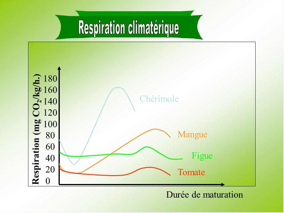Respiración Climatérica