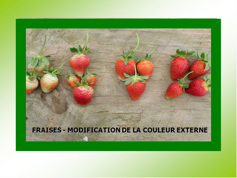 FRAISES - MODIFICATION DE LA COULEUR EXTERNE