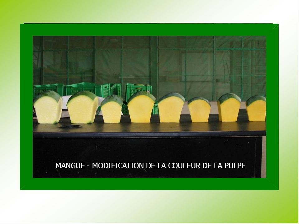 MANGUE - MODIFICATION DE LA COULEUR DE LA PULPE