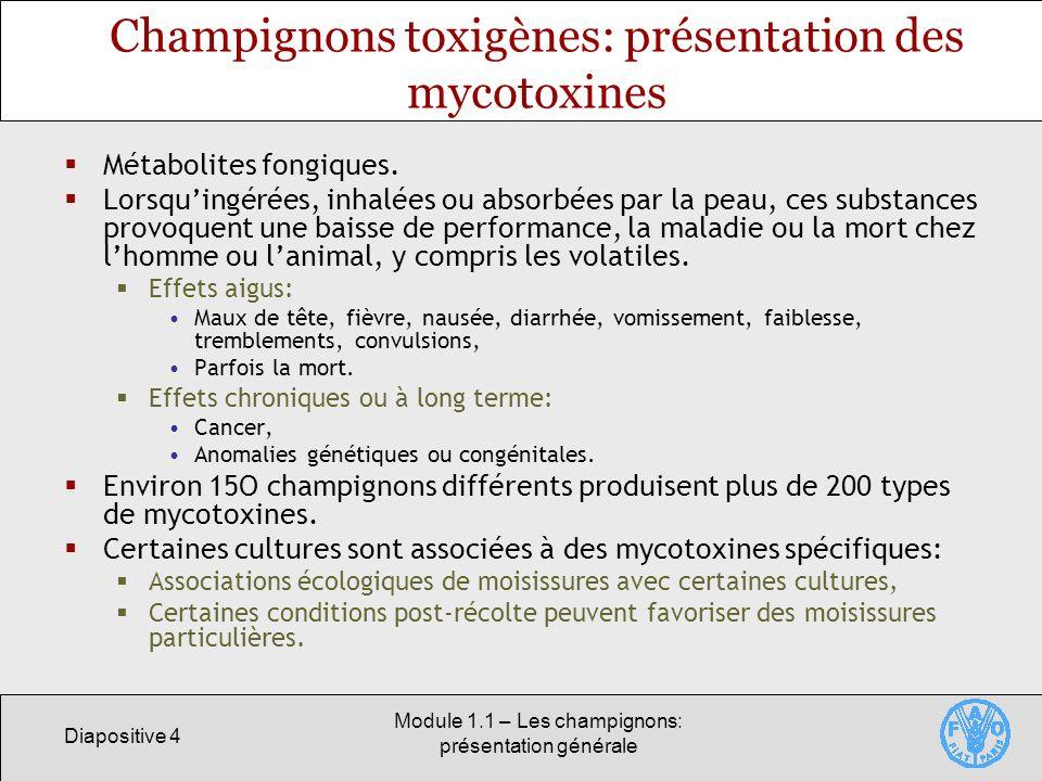 Champignons toxigènes: présentation des mycotoxines