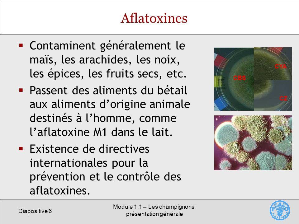 Module 1.1 – Les champignons: présentation générale