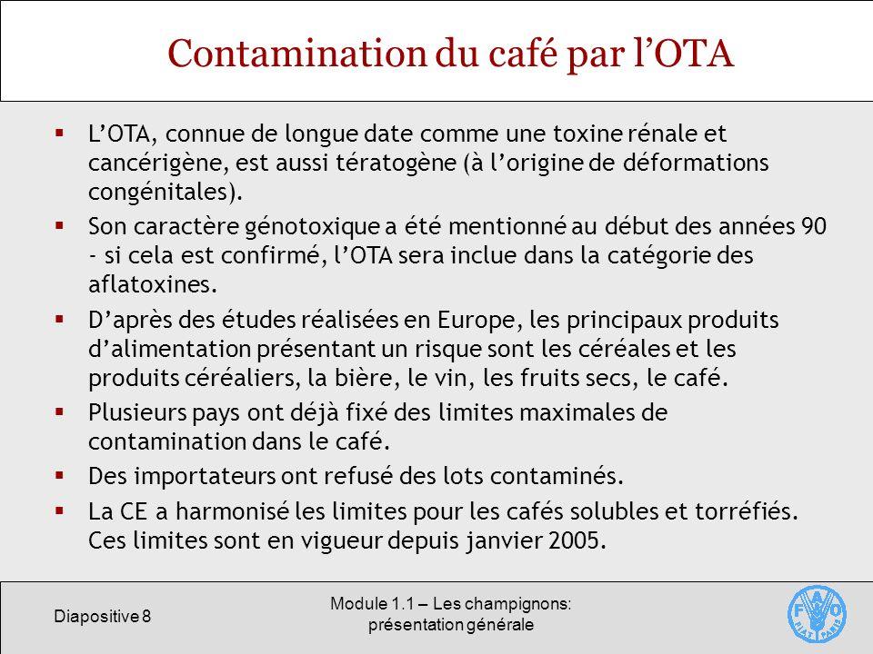Contamination du café par l'OTA