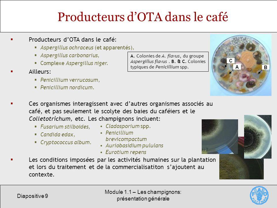 Producteurs d'OTA dans le café