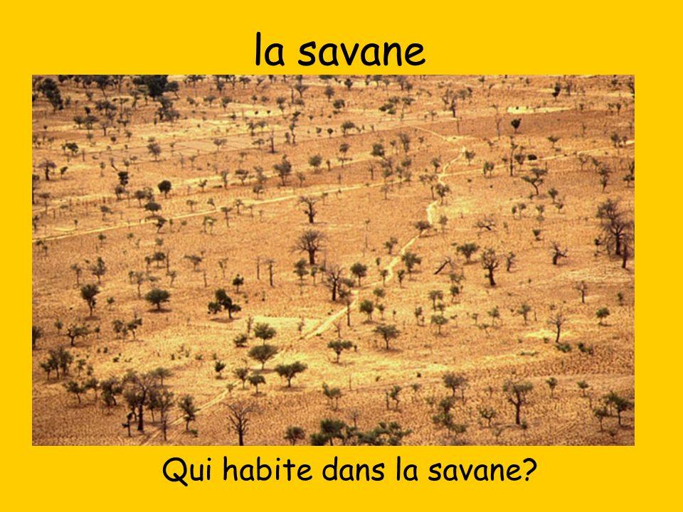 la savane Qui habite dans la savane