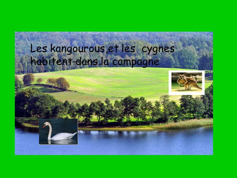 Les kangourous,et les cygnes