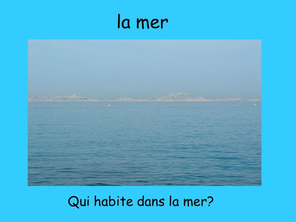 la mer Qui habite dans la mer
