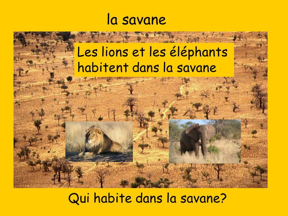 la savane Les lions et les éléphants habitent dans la savane