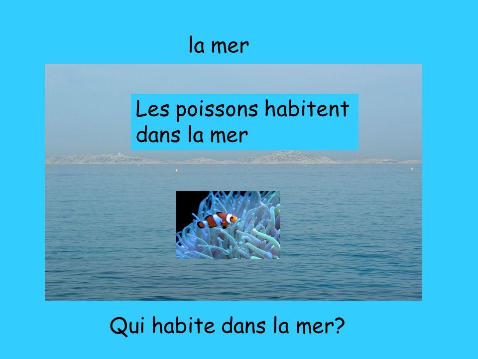 la mer Les poissons habitent dans la mer Qui habite dans la mer