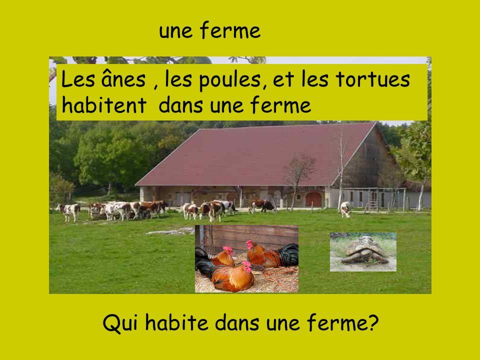 une fermeLes ânes , les poules, et les tortues.-------- dans une ferme.