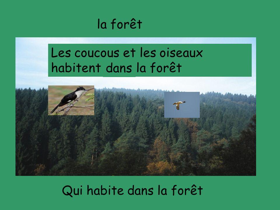 la forêt Les coucous et les oiseaux habitent ---- la forêt dans Qui habite dans la forêt