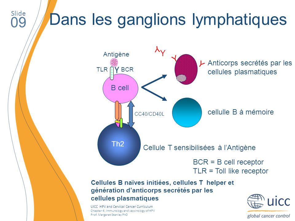 Dans les ganglions lymphatiques
