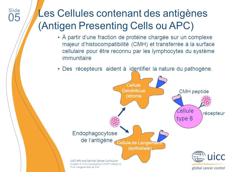 SlideLes Cellules contenant des antigènes (Antigen Presenting Cells ou APC) 05.
