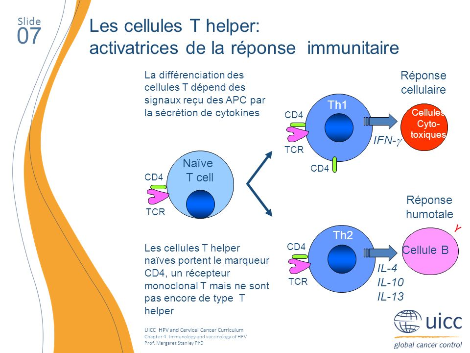 07 Les cellules T helper: activatrices de la réponse immunitaire Slide