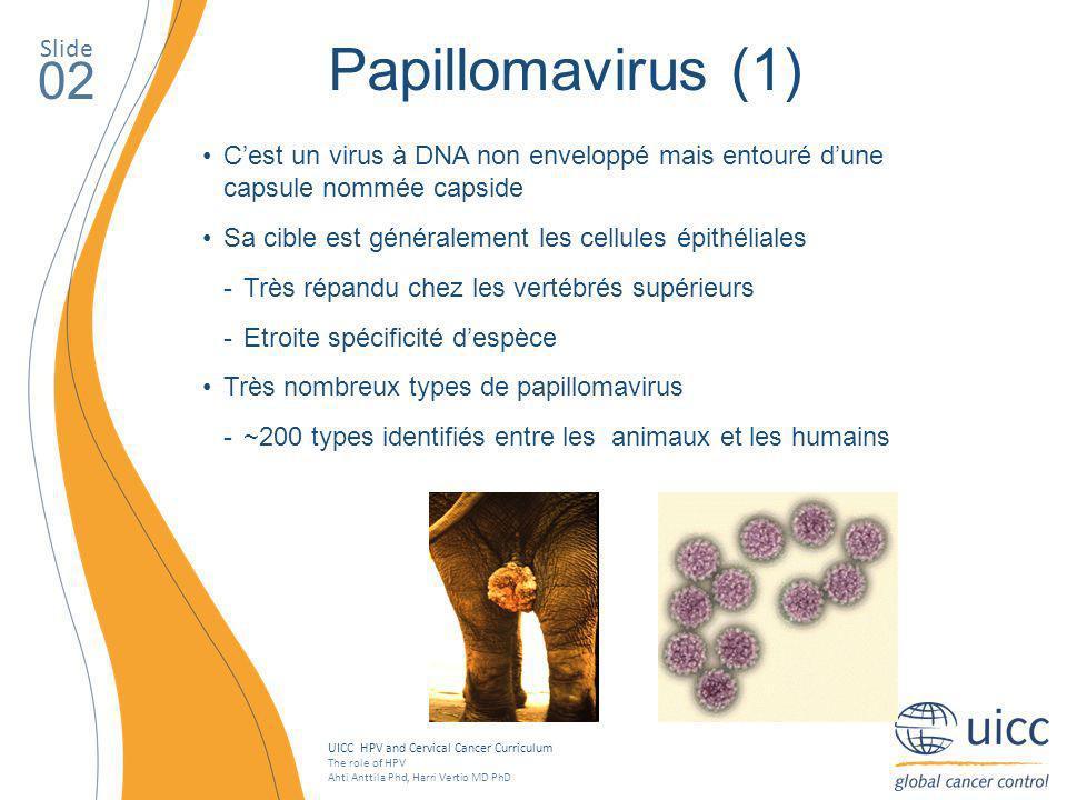 Papillomavirus (1) 02 Slide