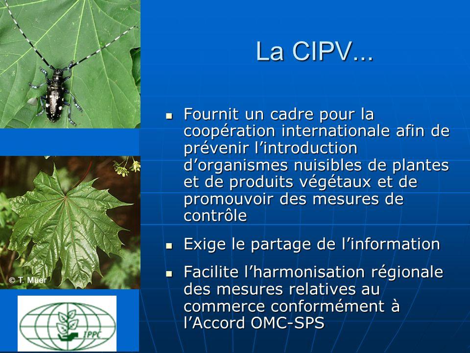 La CIPV...