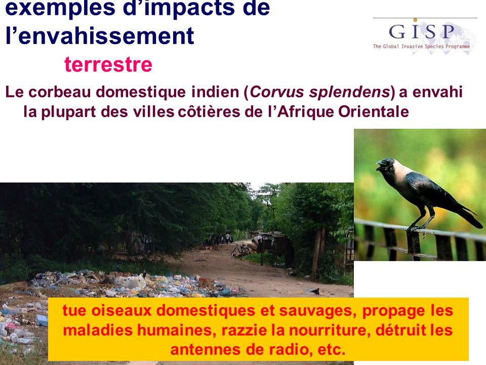 exemples d'impacts de l'envahissement