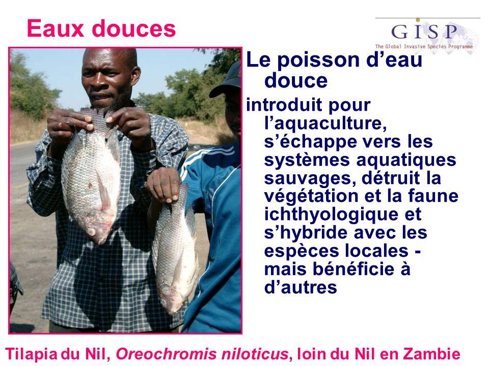 Eaux douces Le poisson d'eau douce