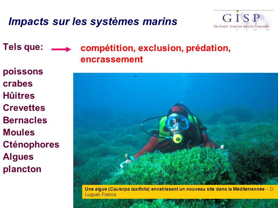 Impacts sur les systèmes marins