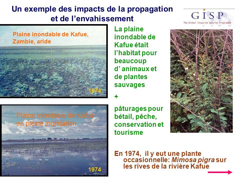 Un exemple des impacts de la propagation et de l'envahissement