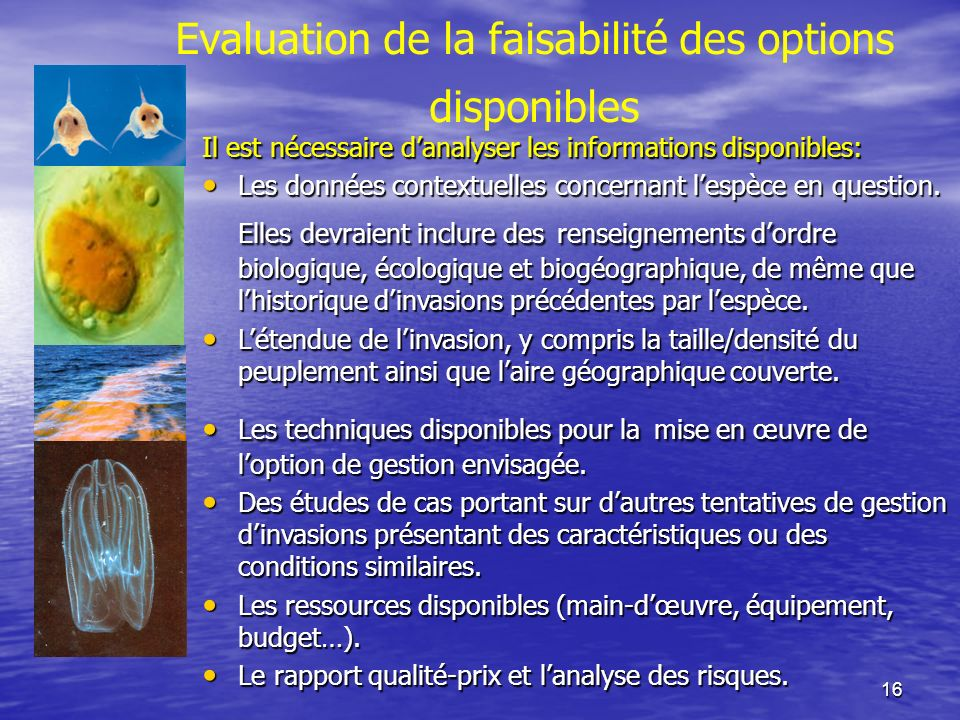 Evaluation de la faisabilité des options disponibles