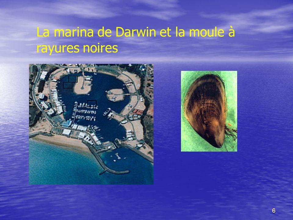 La marina de Darwin et la moule à rayures noires