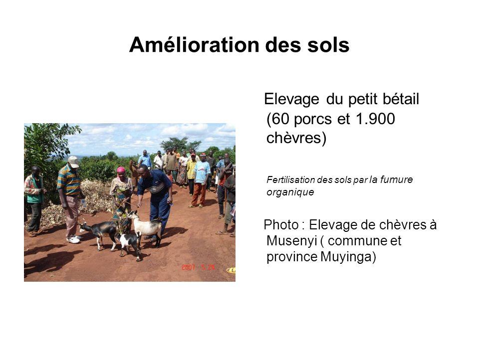 Amélioration des sols Elevage du petit bétail (60 porcs et 1.900 chèvres) Fertilisation des sols par la fumure organique.