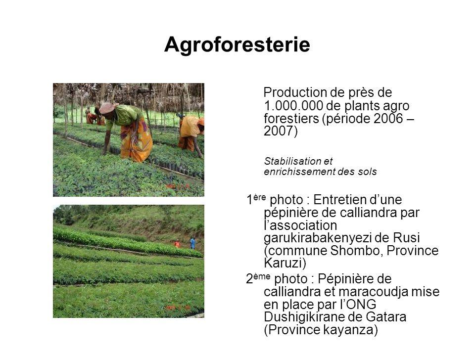 Agroforesterie Production de près de 1.000.000 de plants agro forestiers (période 2006 – 2007) Stabilisation et enrichissement des sols.