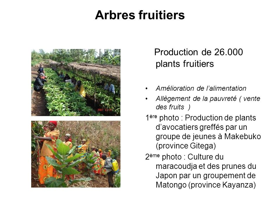 Arbres fruitiers Production de 26.000 plants fruitiers