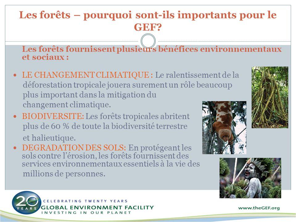 Les forêts – pourquoi sont-ils importants pour le GEF