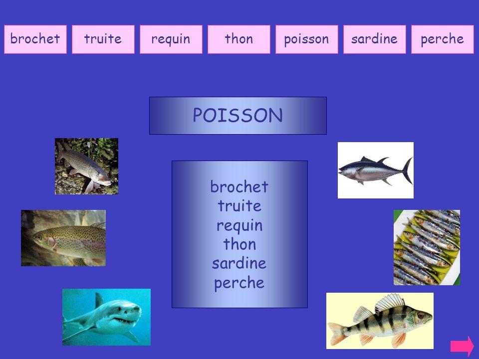 POISSON brochet truite requin thon sardine perche brochet truite